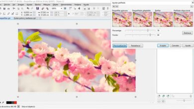 Photo of How to fix the blurry appearance of a photo with Corel Photo Paint – Very easy