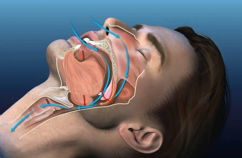 breathing anatomy when sleeping