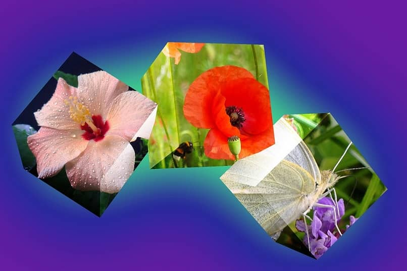 colorful flowers on a purple background