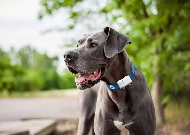 gray dog park background