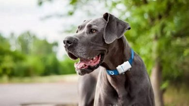 Photo of What are the best pet GPS locators?